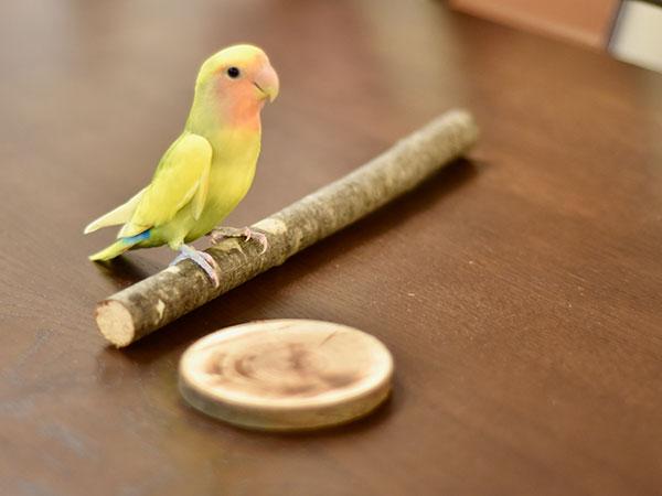 動物・鳥用かじり木・とまり木