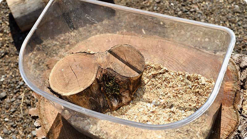 昆虫用止まり木